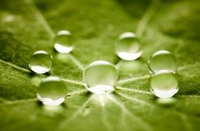 Promuovere le energie rinnovabili, l'efficientamento energetico e la strategia rifiuti zero in Cilento(2)