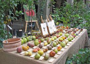 La salvaguardia dei fruttiantichi