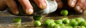oliva salella ammaccata del cilento
